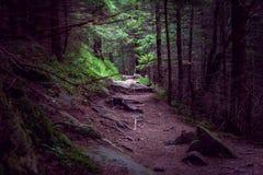 Accenda alla fine di un sentiero per pedoni della foresta Fotografie Stock