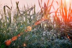 Accendendo l'effetto del chiarore sulle gocce di acqua sotto l'erba fiorisca i terrazzi sugli altopiani Fotografia Stock Libera da Diritti