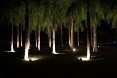 Accendendosi agli alberi nel parco pubblico alla notte Immagine Stock