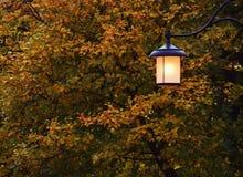Accendendosi in autunno fotografie stock libere da diritti