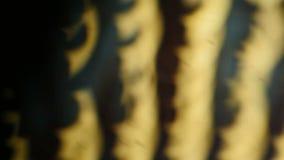 Accendere di luci del fuoco di flusso lentamente e diventato luminoso archivi video