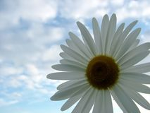 Accept my friendship. Summer, sky, daisy, flower, concept Royalty Free Stock Image