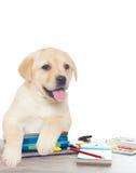 Accesorios de la escuela y del perrito Fotos de archivo libres de regalías