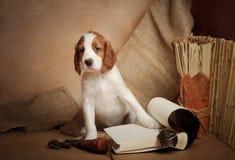 Accesorios del perrito y de la caza Imágenes de archivo libres de regalías