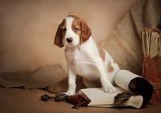Accesorios del perrito y de la caza Imagenes de archivo