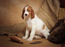 Accesorios del perrito y de la caza Foto de archivo libre de regalías