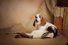 Accesorios del perrito y de la caza Foto de archivo