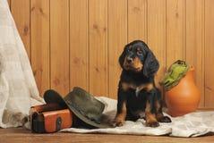 Accesorios del perrito y de la caza Fotografía de archivo libre de regalías