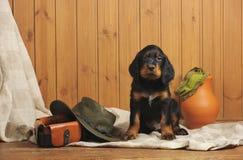 Accesorios del perrito y de la caza Imagen de archivo