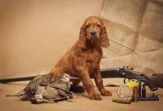Accesorios del perrito y de la caza Fotos de archivo libres de regalías