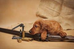 Accesorios del perrito y de la caza Fotos de archivo