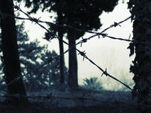 Access barring. A barbed wire over trees and grass royalty free stock photography