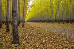 Access road to a tree farm autumn Royalty Free Stock Photos