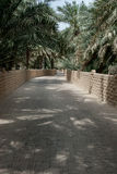 Access roads and tracks in a date palm oasis Royalty Free Stock Photography