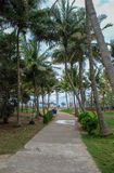 Access to the beach on the path through the palm royalty free stock image