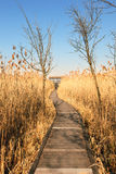 Access to the watchtower for bird watching Stock Image