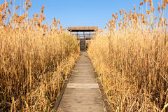 Access to the watchtower for bird watching Royalty Free Stock Photography