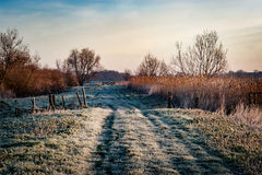 Access track through Fenland with frost and reedbed Royalty Free Stock Images