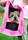 Accessori dell'animale domestico con il cane sveglio. immagini stock libere da diritti