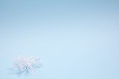 accessorie buttonhole γάμοι πετάλων Στοκ εικόνες με δικαίωμα ελεύθερης χρήσης