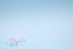 Accessorie di cerimonie nuziali un occhiello e petali Immagini Stock Libere da Diritti