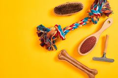 Accessories for the grooming of the dog. Combs and brushes for dogs. Top view Stock Images