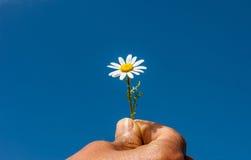 Accetti la mia amicizia, il cielo, la mano, la margherita, concetto Fiore Immagini Stock Libere da Diritti