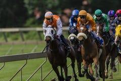 Acción cercana de la carrera de caballos Fotografía de archivo