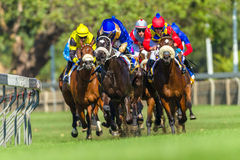 Acción corriente de la carrera de caballos Imagen de archivo libre de regalías