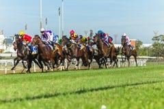 Acción corriente de la carrera de caballos Fotos de archivo libres de regalías