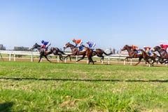 Acción corriente de la carrera de caballos Fotos de archivo