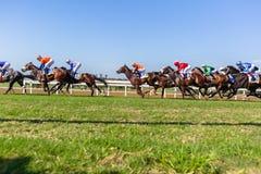 Acción corriente de la carrera de caballos Imágenes de archivo libres de regalías