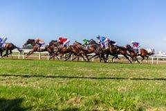 Acción corriente de la carrera de caballos Foto de archivo libre de regalías