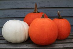 Acción de gracias, caída, fondo del otoño Imágenes de archivo libres de regalías