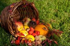 Acción de gracias - cesta colorida del otoño con las frutas Imagen de archivo libre de regalías