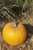 """acción de gracias de la calabaza de Halloween del ¿del ï"""" en octubre Imágenes de archivo libres de regalías"""