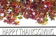 Acción de gracias feliz contra árboles del otoño Foto de archivo libre de regalías