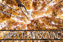 Acción de gracias feliz contra árboles del otoño Fotos de archivo