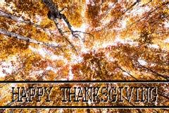 Acción de gracias feliz contra árboles del otoño Fotografía de archivo
