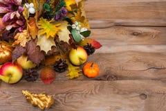 Acción de gracias rústica que saluda las hojas del roble de oro y amarillo Fotografía de archivo