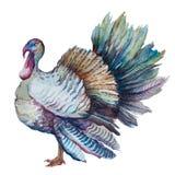 Acción de gracias Turquía Imágenes de archivo libres de regalías