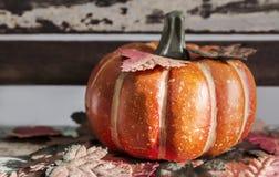 Acción de gracias y concepto de Halloween de calabaza con las hojas de arce Fotografía de archivo libre de regalías