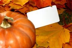 Acción de gracias y tarjeta en blanco de Halloween en la calabaza y las hojas de otoño Fotos de archivo