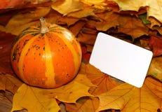 Acción de gracias y tarjeta en blanco de Halloween en la calabaza y las hojas de otoño Foto de archivo libre de regalías