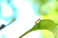 Acción de hormigas, insecto, naturaleza Fotos de archivo libres de regalías