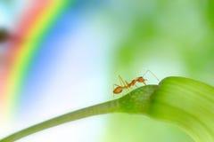 Acción de hormigas, insecto, naturaleza Foto de archivo libre de regalías