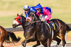 Acción de la carrera de caballos Fotografía de archivo