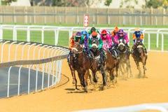 Acción de la carrera de caballos Fotografía de archivo libre de regalías