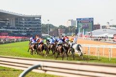 Acción de la carrera de caballos Imagen de archivo libre de regalías