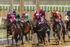 Acción de la carrera de caballos Imágenes de archivo libres de regalías